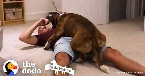 Adopted Stray Dog Wants His Human to Be Proud