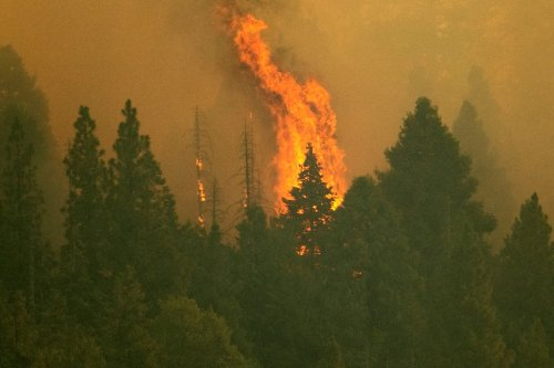 Sequoia National Park fire: Flames enter at least four giant sequoia groves