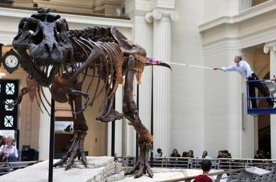 Billions of T.rex dinosaurs once roamed North America, new study shows