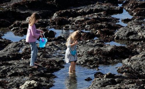 4 more spectacular Bay Area tide pools to explore