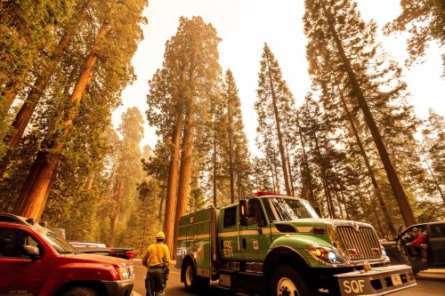 Central California's out-of-control KNP wildfire closing in on giant historic trees