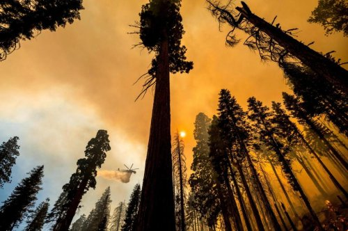 'The Four Guardsmen': Famous giant trees unharmed by Sequoia National Park fire