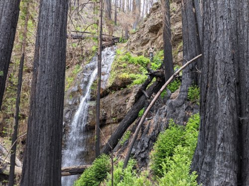 Big Basin Redwoods: State commits $186 million to wildfire rebuilding at famed park