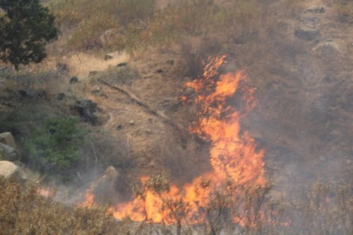 Dixie Fire grows to 217,581 acres overnight
