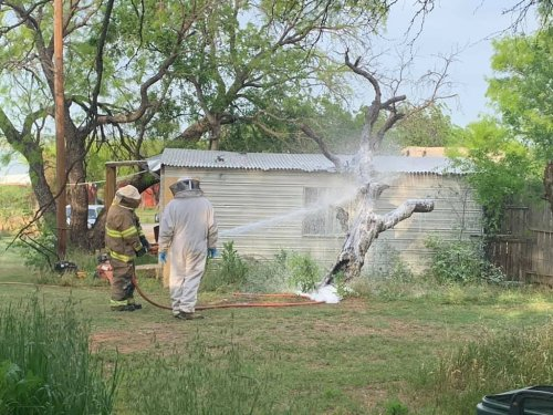 Man mowing his lawn killed after he was attacked by aggressive swarm of bees