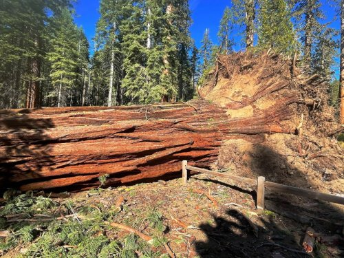 Yosemite: Giant sequoia grove reopens after 100 mph winds topple 15 ancient trees