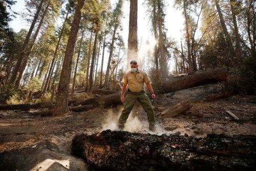 Tree still smoldering from 2020 Sequoia National Park fire