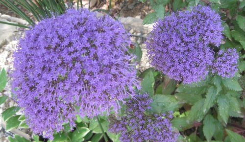 Exploring the Getty Center garden and seeing an unexpected standout amid the floral frenzy