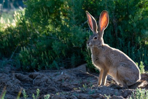 How to prevent rabbits from attacking your garden