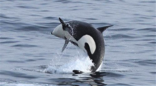 Monterey Bay and parts of Big Sur added to expanded killer whale protection