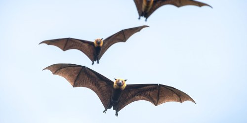 How to Attract Bats to Your Yard
