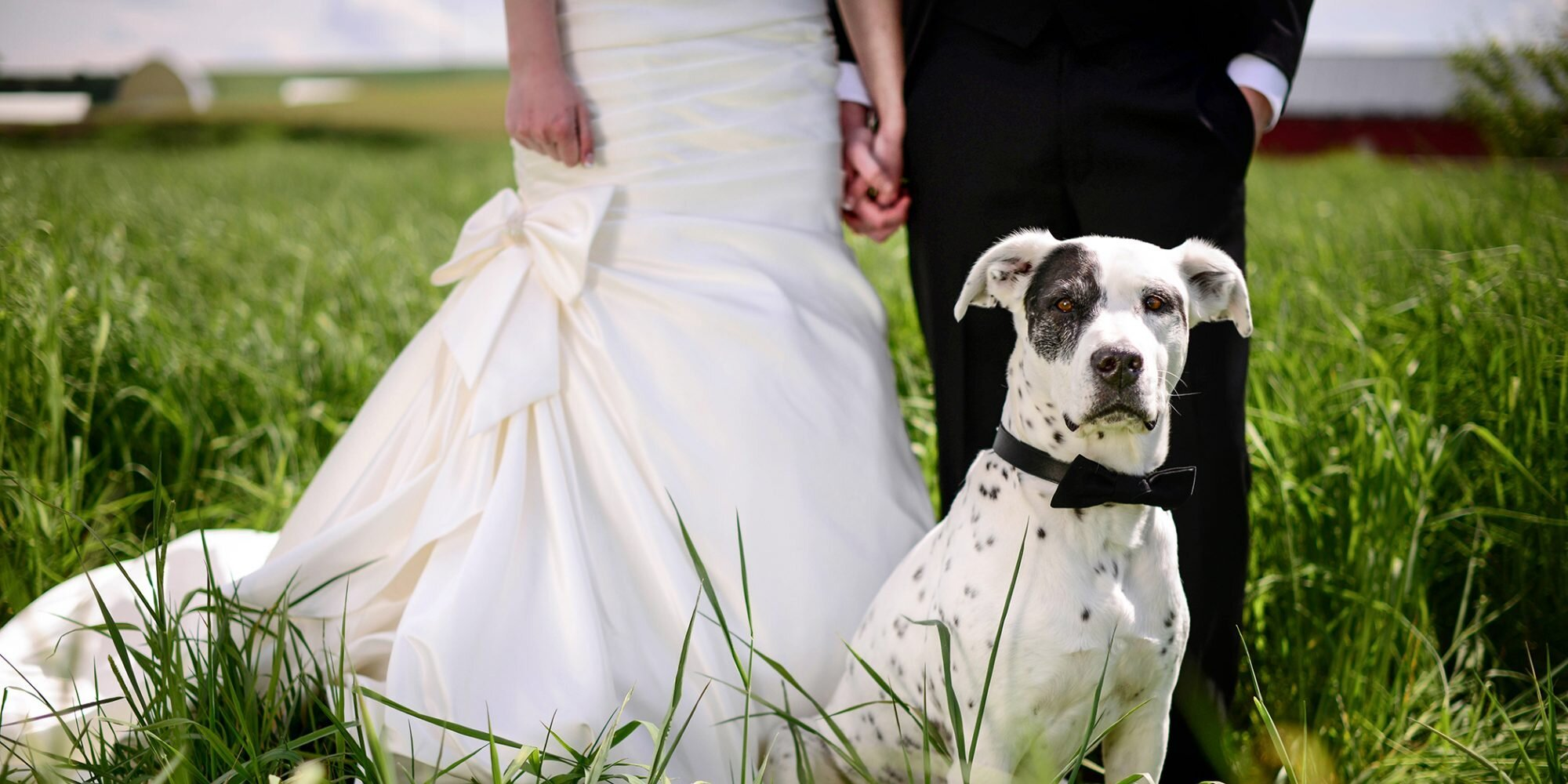 The Do's and Don'ts for Including Your Dog in Your Wedding