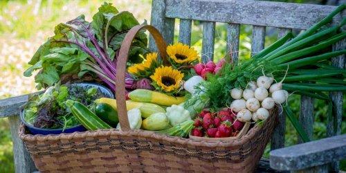 4 Reasons Why You Should Grow an Organic Garden