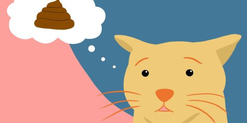 Cat Can't Poo? Here's What to Do