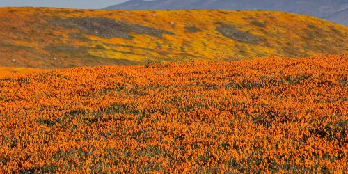 6 Places to See Stunning Wildflowers Across the U.S.