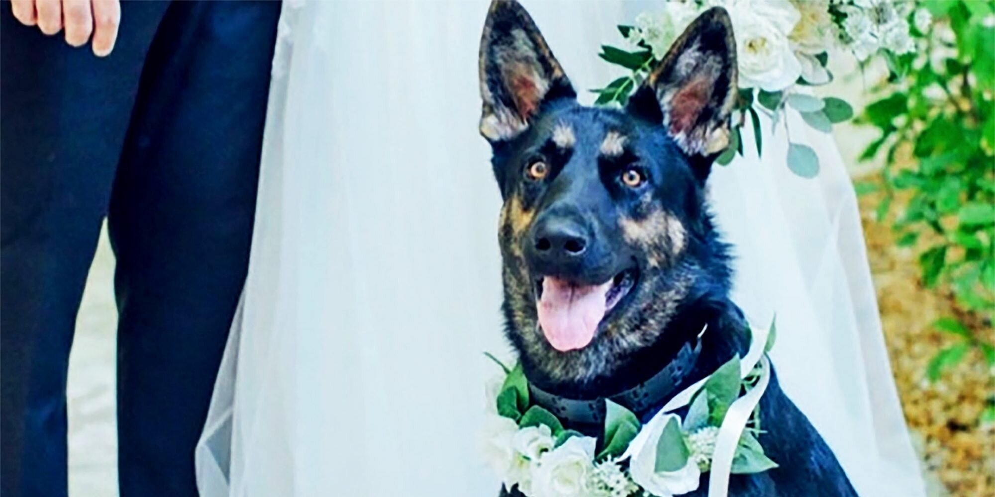 16 Adorable Ways to Include Your Pet in Your Wedding