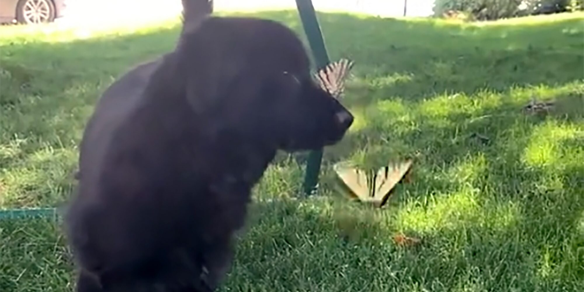 Meet Gordo, the Adorable Dog Version of Snow White