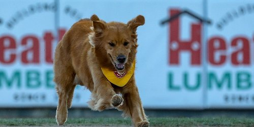 Who Needs Humans? Meet Rookie and Dash, Bat Dogs for the Trenton Thunder