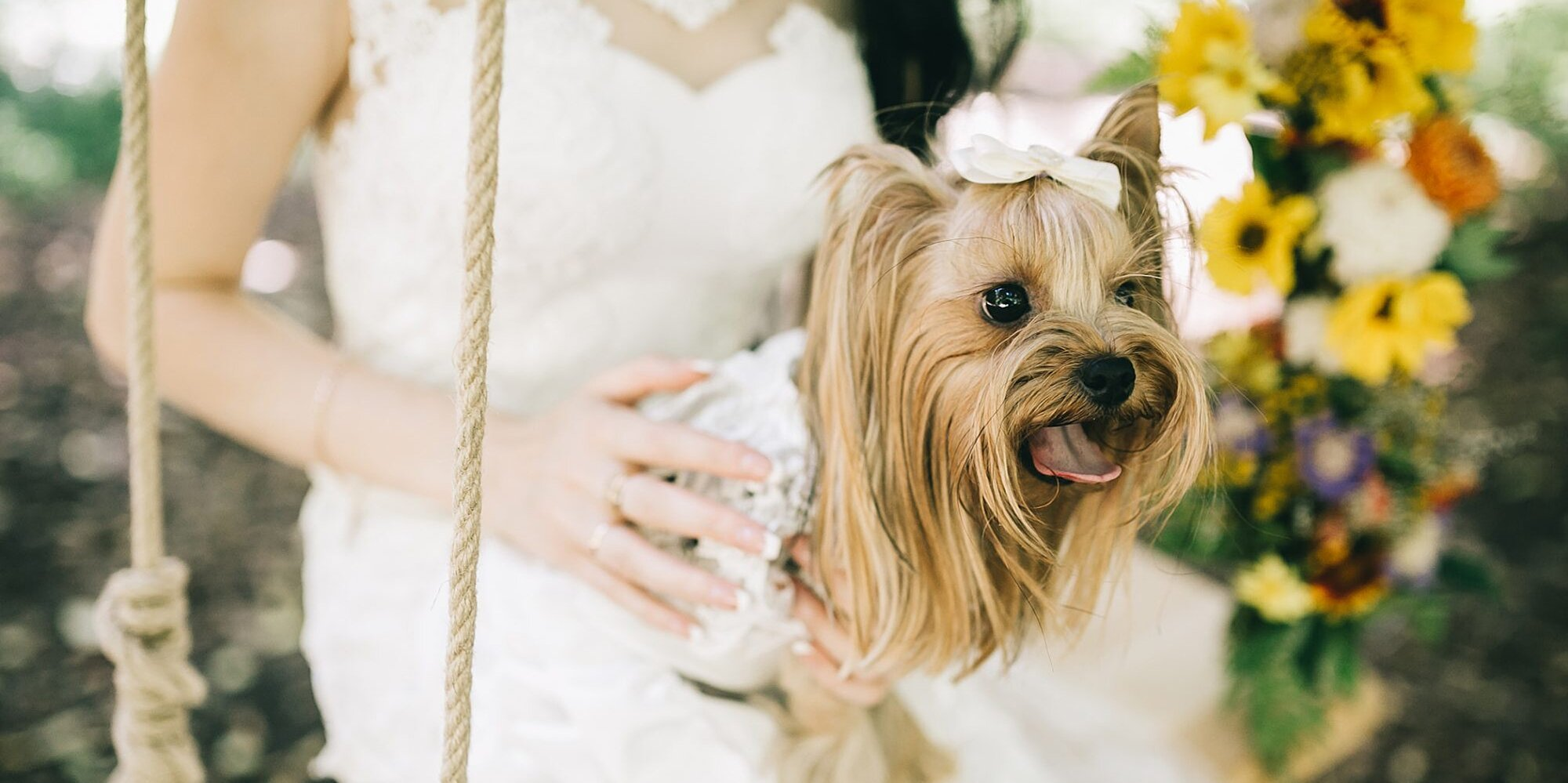 15 Times Dapper Dogs in Wedding Attire Almost Outshined the Happy Couple