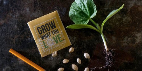 What's the Difference Between Sowing Seeds and Planting Starts?