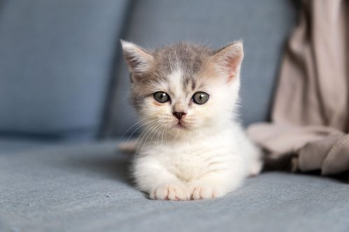 Adorable Cats with Little Legs