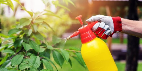 You Can Use Vinegar to Safely Remove Pesky Weeds from Your Garden—Here's How