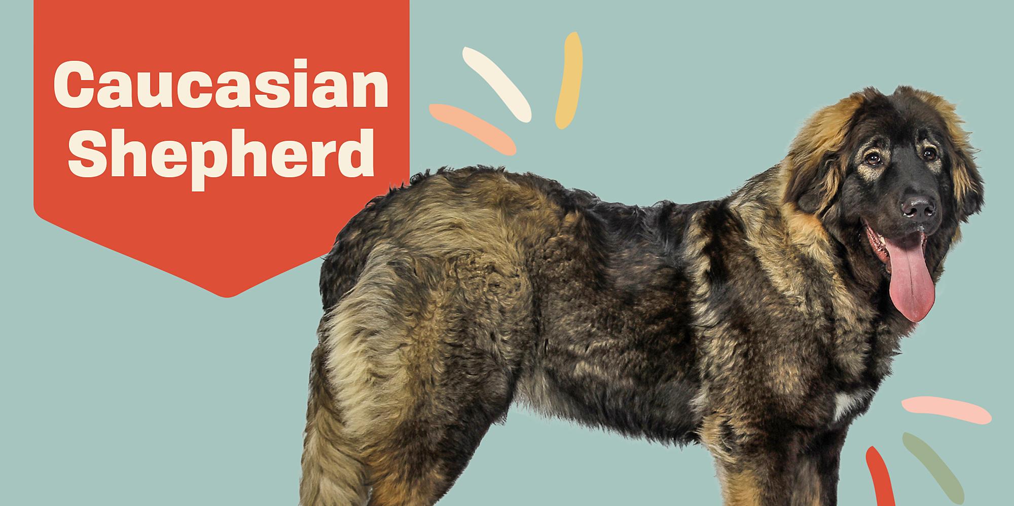 Caucasian Shepherd Dog (Caucasian Ovcharka)