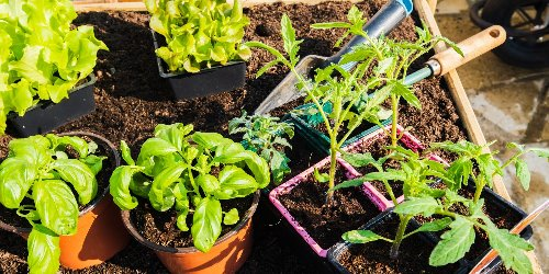 Gardening  cover image