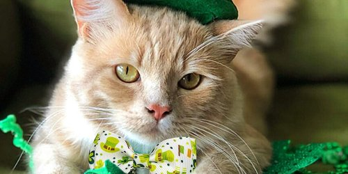 Pet Me I'm Irish: 18 St. Patrick's Day Pet Products for Your Lucky Charm