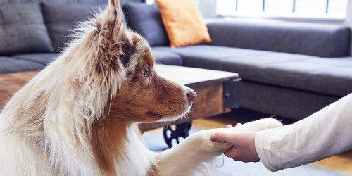 How to Teach a Dog to Shake