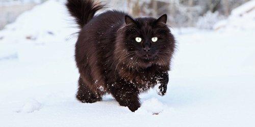 Adorable Golden Retriever Takes Cat On a Sleigh Ride Through the Snow