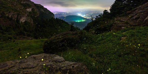 Grandfather Mountain in North Carolina is Home to Rare Population of Synchronous Fireflies