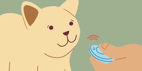 How to Train Your Cat Using a Clicker
