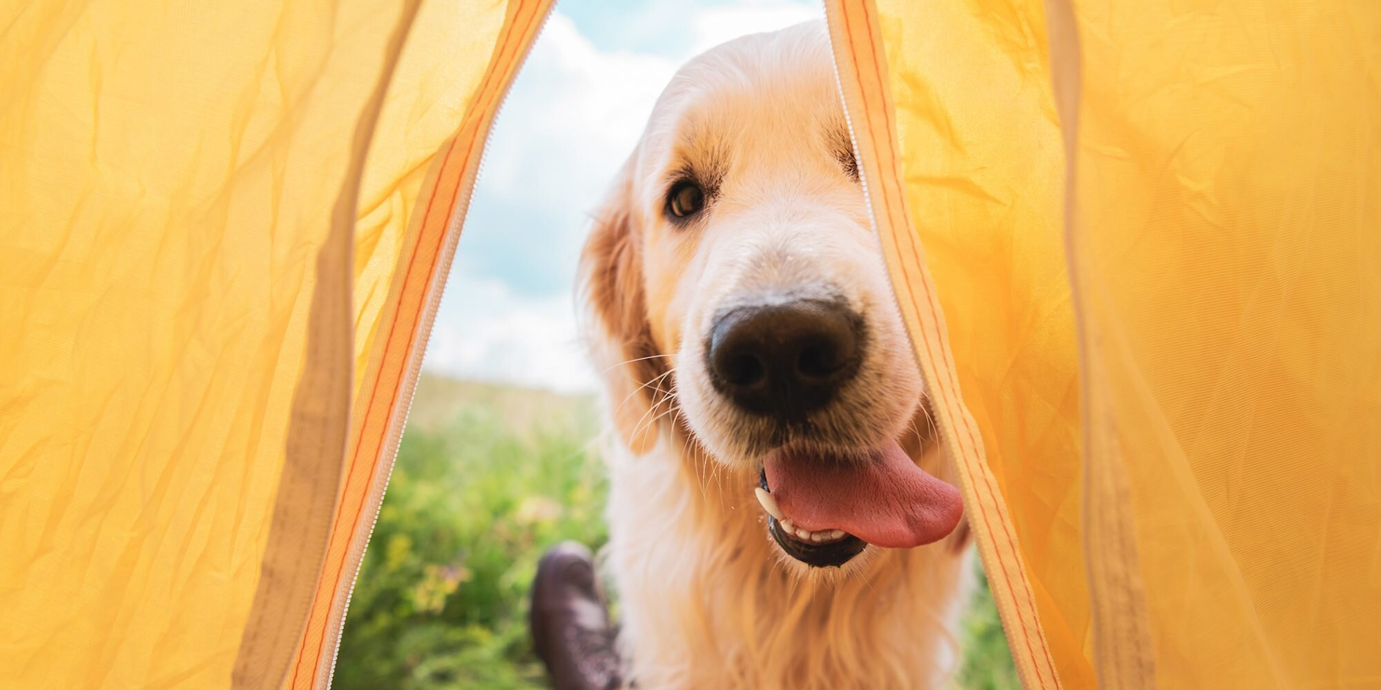 Going Camping With Your Dog This Summer? Don't Forget These Tips!