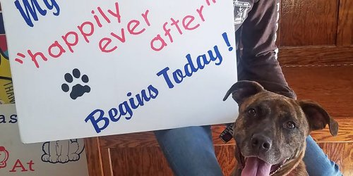 Pit Bull Mix with 'Silly Personality' Adopted After Spending 842 Days in Ohio Shelter