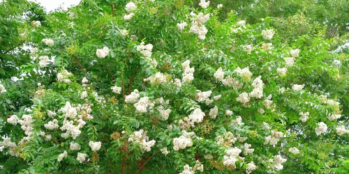 Let's Be Honest – Crepe Myrtles Are Messy