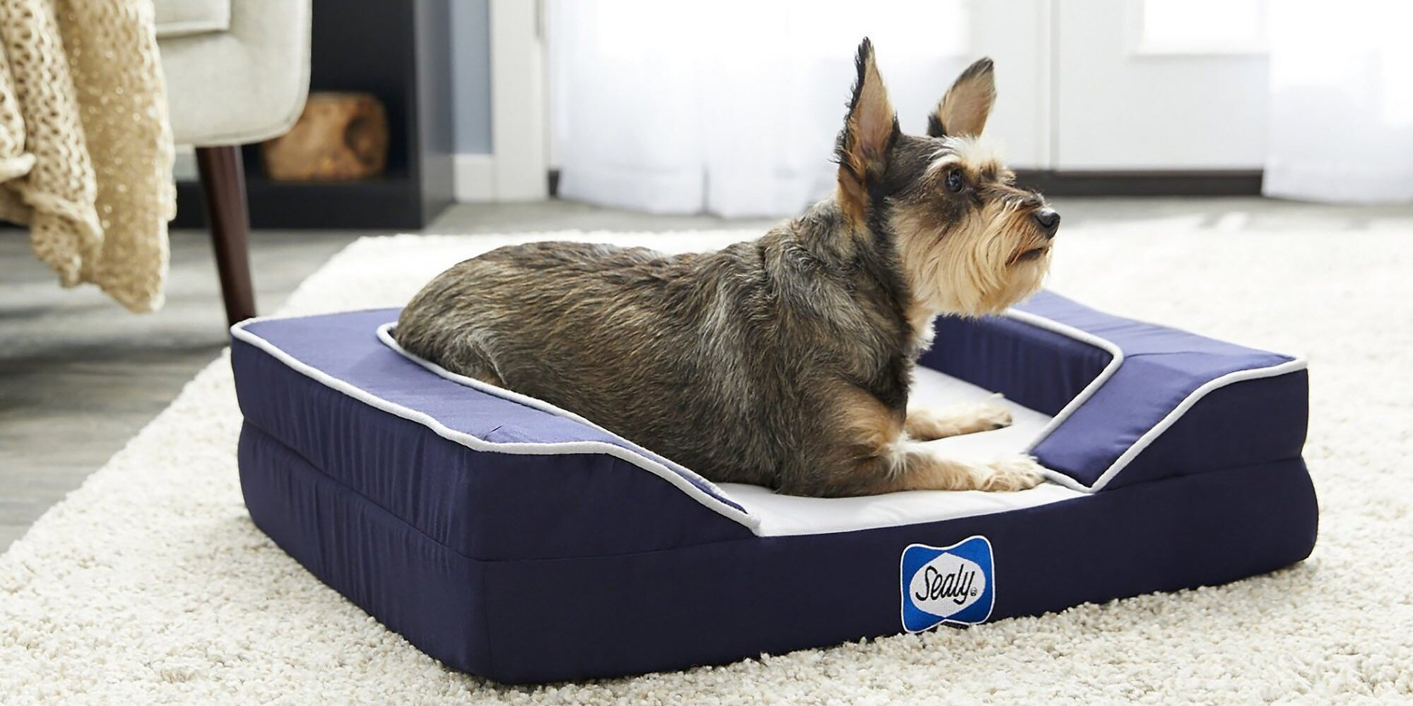 The Best Dog Cooling Mats, Beds, and Pads to Keep Your Pup Cool This Summer