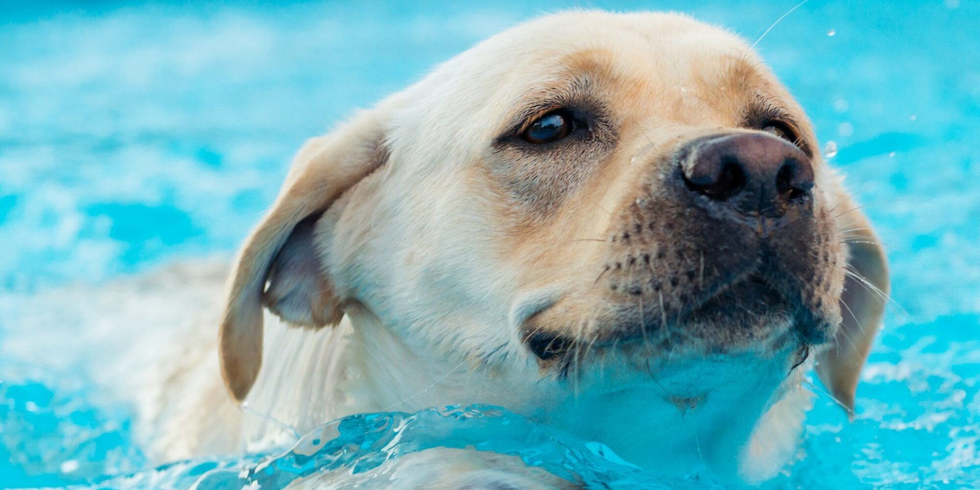 How to Teach Your Doggy to Paddle