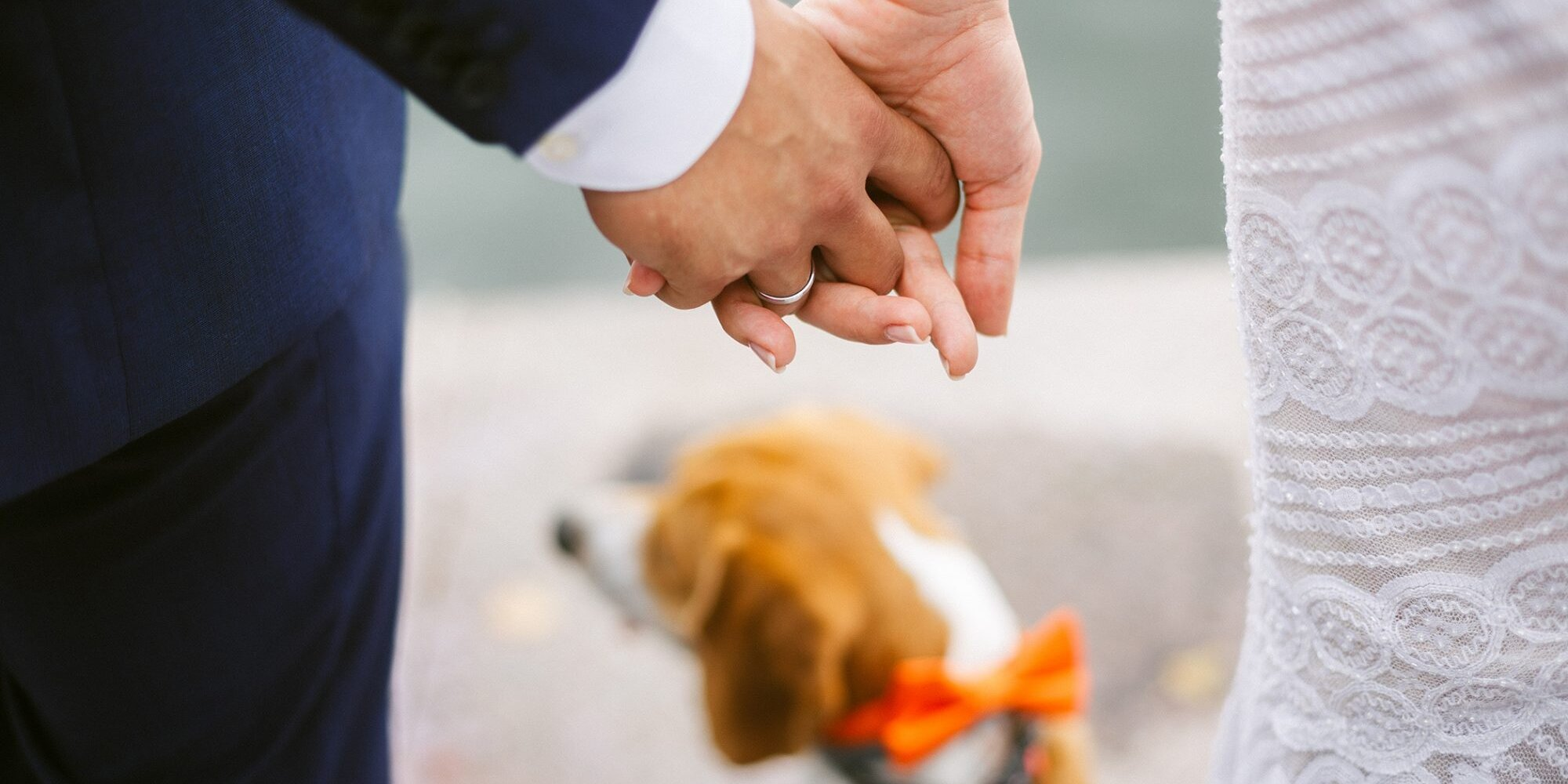 7 Things to Consider Before Adding Your Pet to Your Wedding Party