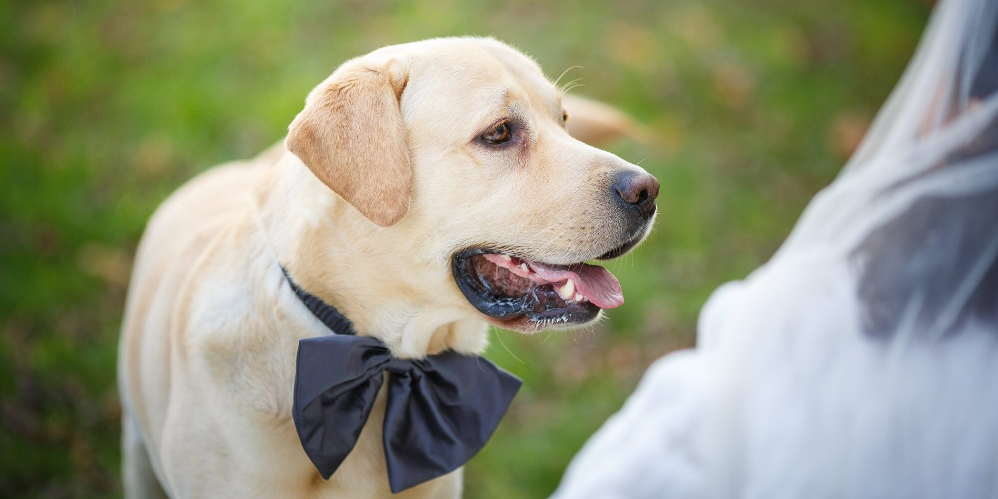 One-Third of Pet Owners Include Their Furry Friend in Their Wedding or Engagement, Survey Finds