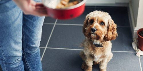 How Much Should I Actually Be Feeding My Dog?