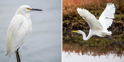 California's Rugged Central Coast Is a Bird-watcher's Paradise