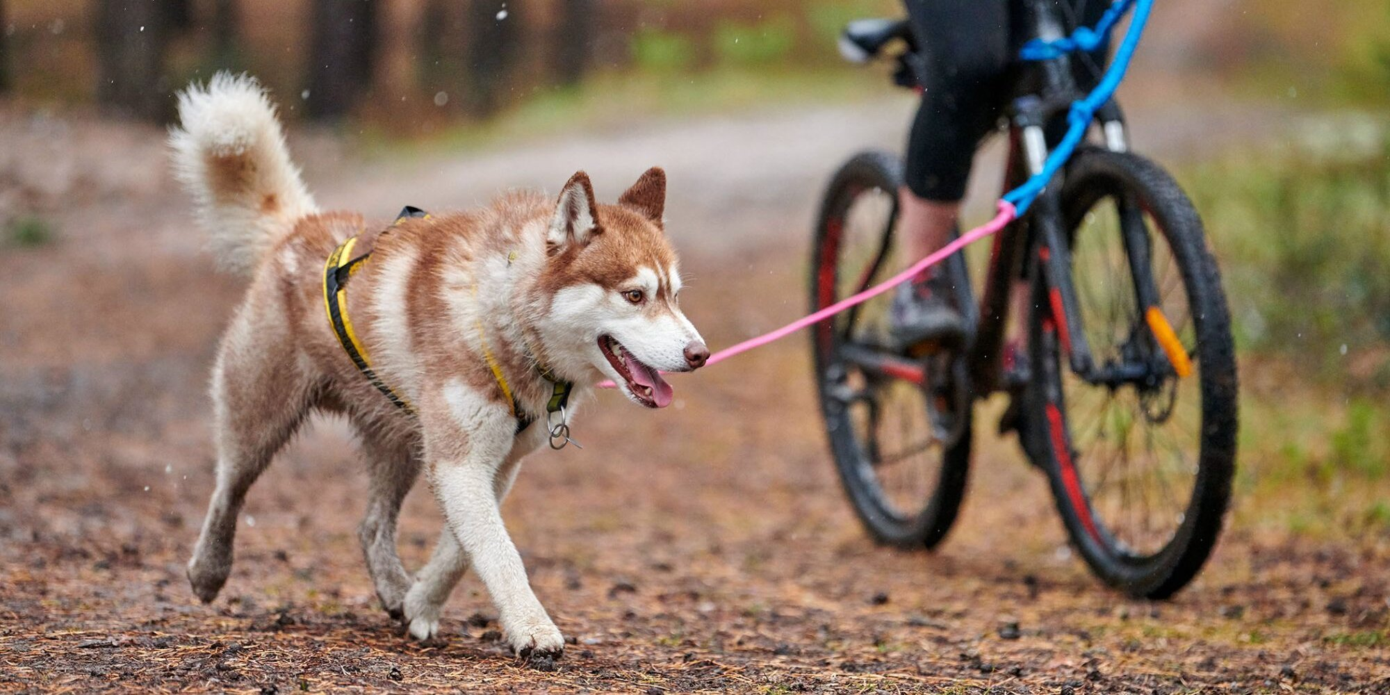 Biking With Dogs: Dos and Don'ts for Canine Cycling