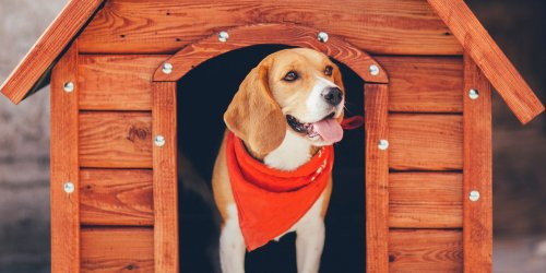 How to Heat a Doghouse and Keep Your Pup Warm All Winter