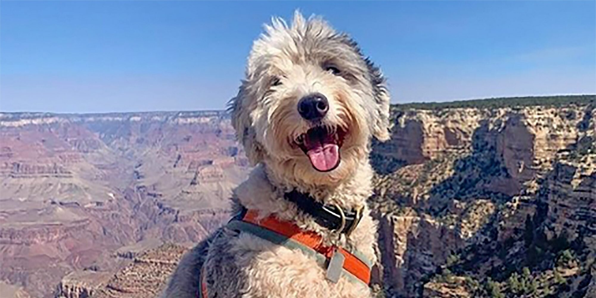 20 Top Dog-Friendly Vacation Destinations for You and Your Best Travel Buddy