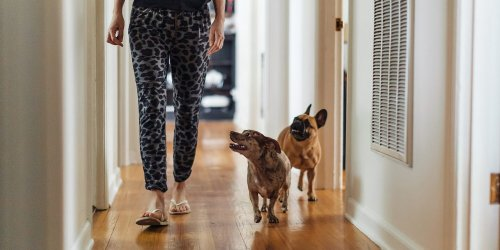Why Your Dog Follows You Everywhere, According to Behaviorists