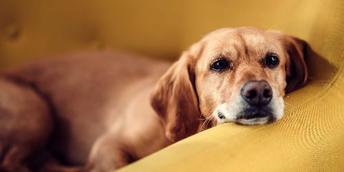 How to Know if Your Dog Has Eaten Something Toxic
