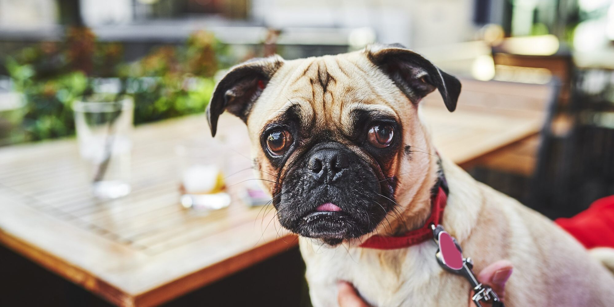 The Ultimate Guide to the Best Dog-Friendly Bars in the U.S.