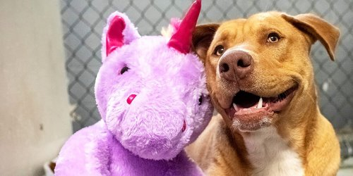 Unicorn-Stealing Rescue Dog Returns to Dollar General 1 More Time Before Moving to New Home