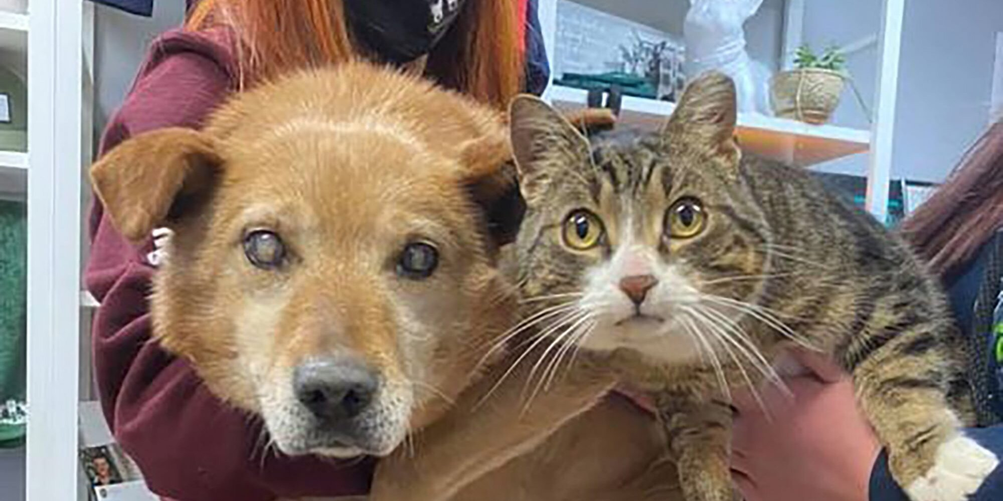 This Blind Dog and His Support Cat Are Adopted Into a New Family Together